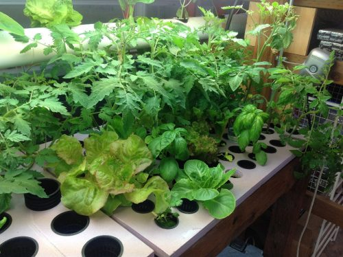 everything-to-know-about-water-culture-hydroponics-system-1