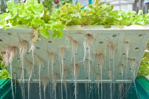 everything-to-know-about-water-culture-hydroponics-system-3