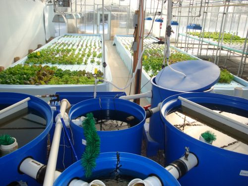 everything-to-know-about-water-culture-hydroponics-system-5