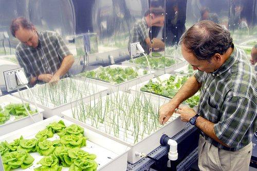 everything-to-know-about-water-culture-hydroponics-system-6