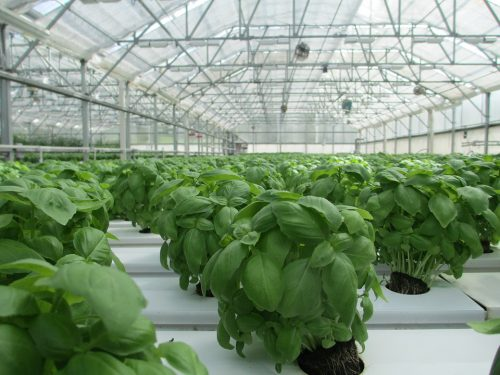 tips-on-controlling-pests-from-the-2016-atlanta-argricultural-conference-1
